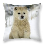 Husky Dog Puppy Throw Pillow