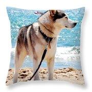 Husky On The Beach Throw Pillow