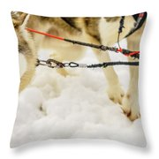 Husky Sled Dogs, Lapland, Finland Throw Pillow