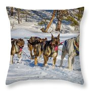 Husky Sled Dogs, Lapland, Sweden Throw Pillow