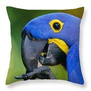 Hyacinth Macaw Anodorhynchus Throw Pillow