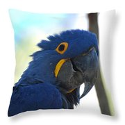 Hyacinth Macaw Throw Pillow