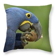 Hyacinth Macaw Habitat Eating Piassava Throw Pillow