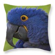 Hyacinth Macaw Portrait Throw Pillow