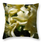 Hyacinth Named City Of Haarlem Throw Pillow