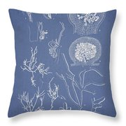 Hyalosiphonia Caespitosa Okamura Valonia Confervoides Throw Pillow by Aged Pixel
