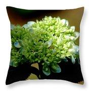 Hydrangea 4 Throw Pillow