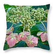 Hydrangea With A New Look Throw Pillow