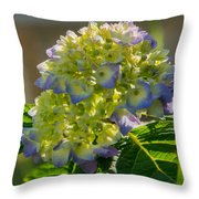 Hydrangeas First Blush Throw Pillow