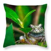 Hyla Versicolor Throw Pillow