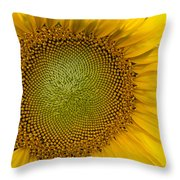 I Got Sunshine Throw Pillow