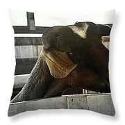 I Have My Eye On First Prize Goat Throw Pillow