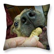 I Love Treats Throw Pillow