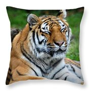 I Peek When I Count Playing Hide N Seek At The Buffalo Zoo Throw Pillow