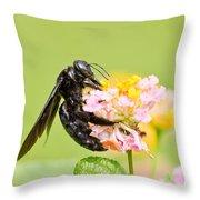 I Want Pollen Throw Pillow