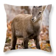 Ibex Pictures 10 Throw Pillow