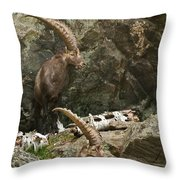 Ibex Pictures 112 Throw Pillow