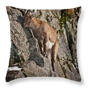 Ibex Pictures 151 Throw Pillow