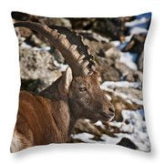 Ibex Pictures 160 Throw Pillow