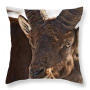 Ibex Pictures 169 Throw Pillow