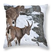 Ibex Pictures 171 Throw Pillow