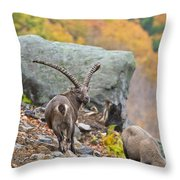 Ibex Pictures 174 Throw Pillow