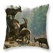 Ibex Pictures 176 Throw Pillow