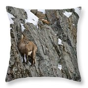 Ibex Pictures 183 Throw Pillow