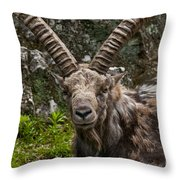 Ibex Pictures 190 Throw Pillow