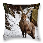 Ibex Pictures 22 Throw Pillow
