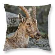 Ibex Pictures 38 Throw Pillow