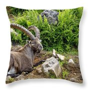Ibex Pictures 64 Throw Pillow