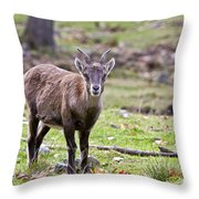 Ibex Pictures 71 Throw Pillow