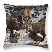 Ibex Pictures 83 Throw Pillow