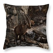 Ibex Pictures 86 Throw Pillow