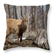 Ibex Pictures 92 Throw Pillow