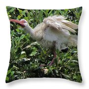 Ibis 12 Throw Pillow