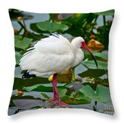 Ibis In Pond Throw Pillow