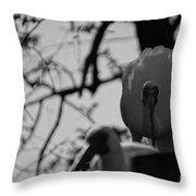 Ibis Stare Down Throw Pillow