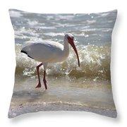 Ibis Walking The Beach Throw Pillow