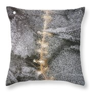 branch in ice - Madison - Wisconsin Throw Pillow
