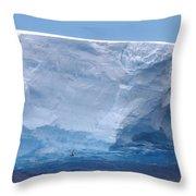 Iceberg With Cape Petrel Throw Pillow