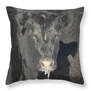 Iced Beef Throw Pillow by Bonfire Photography