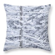Iced Trees Throw Pillow