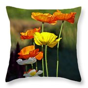 Iceland Poppies In The Sun Throw Pillow
