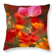 Iceland Poppies Papaver Nudicaule Throw Pillow