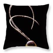 Ichneumon Wasp Antennae Throw Pillow