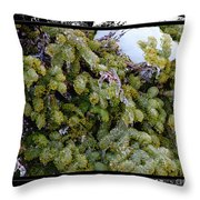 Icy Trees With Black And White Border Throw Pillow