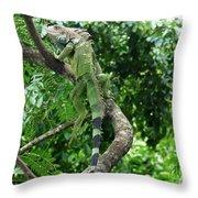 Iguana In A Tree Throw Pillow