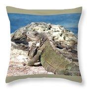 Iguana In The Sun Throw Pillow